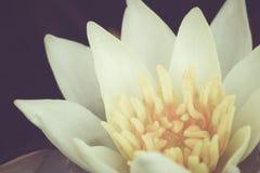 Stile dell'annata del fiore di Lotus Fotografia Stock Libera da Diritti