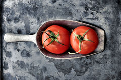 Stile dell'annata del pomodoro Fotografie Stock Libere da Diritti