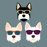 Stile dell'illustrazione di vettore degli occhiali da sole del fronte del cane piano royalty illustrazione gratis