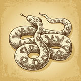 Vettore dell'illustrazione del serpente a terra Fotografia Stock