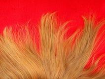 Stile di capelli Immagini Stock