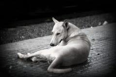 Stile di seduta B&W del cane Fotografia Stock Libera da Diritti