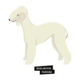 Stile geometrico del bedlington terrier della raccolta del cane Fotografie Stock Libere da Diritti