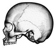 Stile inciso inciso d'annata del cranio retro royalty illustrazione gratis