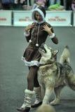 Stile libero cynological della prestazione - muova verso la musica con il vostro cane Fotografia Stock Libera da Diritti