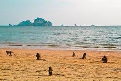 Stile libero della scimmia sulla spiaggia Fotografie Stock Libere da Diritti