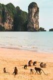 Stile libero della scimmia sulla spiaggia Immagine Stock Libera da Diritti