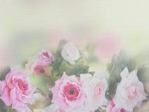 Stile morbido della rosa di rosa immagine stock libera da diritti