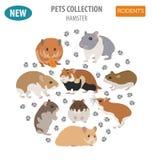 Stile piano stabilito dell'icona delle razze del criceto isolato su bianco Roditore dell'animale domestico Fotografie Stock