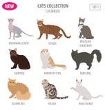 Stile piano stabilito dell'icona delle razze del gatto isolato su bianco Crei per possedere i inf royalty illustrazione gratis