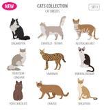Stile piano stabilito dell'icona delle razze del gatto isolato su bianco Crei per possedere i inf illustrazione vettoriale