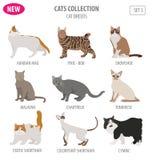 Stile piano stabilito dell'icona delle razze del gatto isolato su bianco Crei per possedere i inf illustrazione di stock