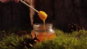 Stile posto piano dell'autunno e del concetto di ringraziamento con caffè, le zucche ed i bastoni di cannella su colore pastello stock footage