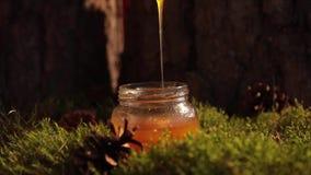 Stile posto piano dell'autunno e del concetto di ringraziamento con caffè, le zucche ed i bastoni di cannella su colore pastello video d archivio