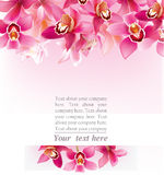 Stilfull design med orkidér Royaltyfri Fotografi