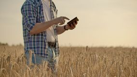 Stilfull gammal caucasian bonde som går i det guld- vetefältet på hans lantgård under morgonsoluppgången arkivfilmer