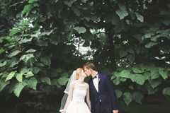 Stilfulla par av lyckliga nygifta personer som går i parkera på deras bröllopdag med buketten Royaltyfri Fotografi