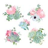 Stilfulla små buketter av suckulenter, protea, steg, anemonen, echeveriaen, vanliga hortensian, gröna växter Arkivbilder