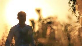 Stilig brudgum som går på vetefältet under härlig solnedgång arkivfilmer
