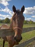 stilig häst fotografering för bildbyråer