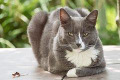 Stilig katt Arkivfoto