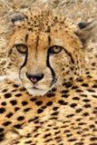 stilig katt Royaltyfria Bilder