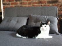 Stilig katt- vän arkivfoto