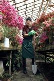 Stilig manlig trädgårdsmästare i förkläde och gröna handskar med en stor skyffel som poserar och ser bort i växthus royaltyfria bilder