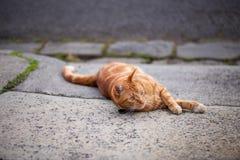 Stilig strimmig kattkatt för röd ingefära som lägger ner i en körbana arkivbilder