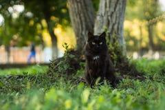Stilig svart katt Royaltyfri Bild