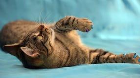 Stilig ung strimmig kattkatt royaltyfri bild