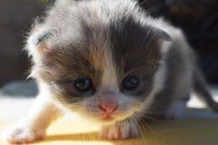 Stiligt en liten kattunge fotografering för bildbyråer