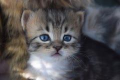 Stiligt en liten kattunge arkivbilder