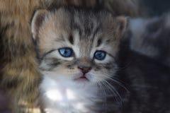 Stiligt en liten kattunge arkivbild