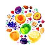 Stiliserad hand dragen vattenfärgillustration med äpplen, citroner, plommoner, aprikors, bär och muttrar i cirkel stock illustrationer