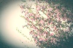 Stiliserat foto av Sakura Royaltyfri Fotografi