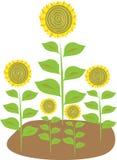 Stilisierte Illustration von fünf Sonnenblumen Lizenzfreie Stockbilder