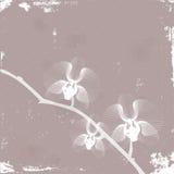 Stilisierte Orchidee Stock Abbildung