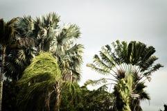 Stilisierte Palmen, die im Wind durchbrennen stockfotos