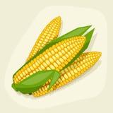 Stilisierte Vektorillustration des frischen reifen Mais Stockfoto