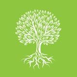 Stilisierter Baum der Zusammenfassung mit Wurzeln und Blättern natürliche Illustration Stockfoto