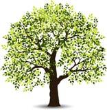 Stilisierter Baum für Sie Design Stockbilder