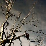 Stilisierter gespenstischer Baum mit Vogel Lizenzfreie Stockfotos