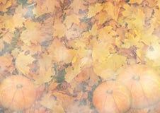 Stilisierter Herbsthintergrund mit Blättern und Kürbisen in den goldenen Tönen Stockbild