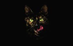 Stilisierter Kopf von Tabby Cat mit der hervorstehenden Zunge und den glänzenden grünen Augen Lizenzfreies Stockfoto