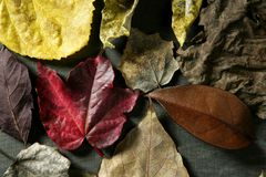 Still of autumn leaves, dark wood background Stock Photos