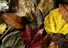Still of autumn leaves, dark wood background, fall Stock Photography