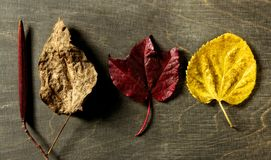 Still of autumn leaves, dark wood background, fall Royalty Free Stock Photos