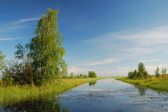 Still canal with swampy banks overgrown by tallgrass. Stock Photo
