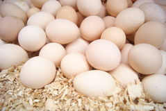 Still categories: Eggs Stock Photography